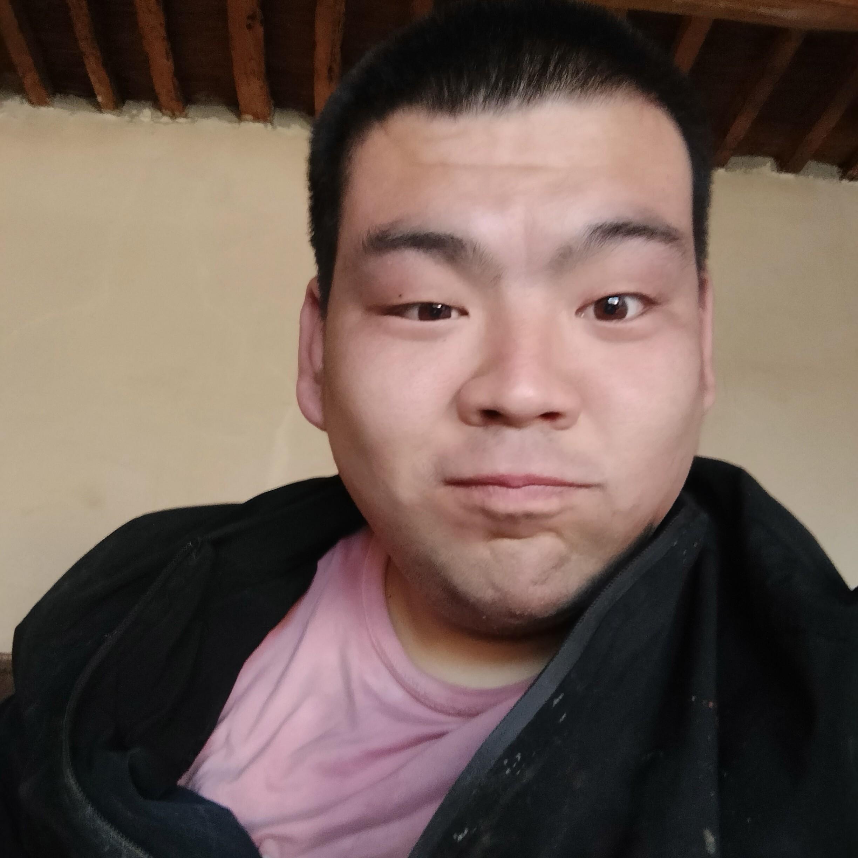 杨哥枯叶蝶的照片