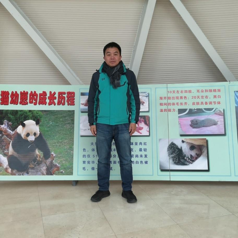 小熊貓愛戀積極的照片